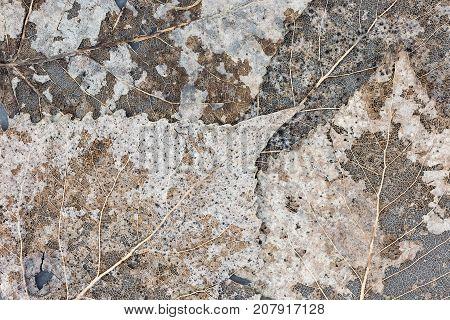 Skeleton Leaf Abstract Natural Background