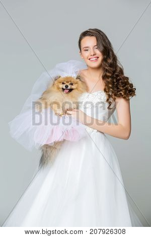 beautiful bride young woman holding spitz dog bride in skirt and veil on gray background. copy space.