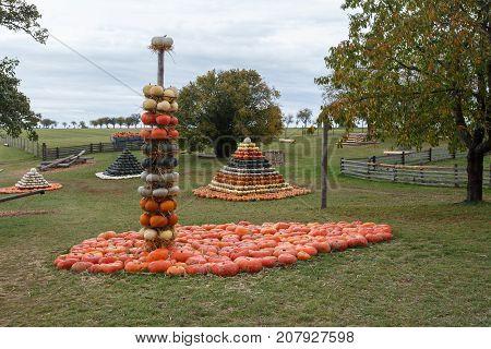 Autumn Harvested Pumpkins Arranged For Fun Like Pyramid