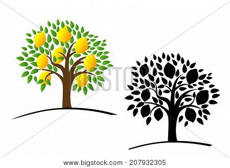 Lemon tree with green leaves. Vector illustration of a tree with ripe lemons. Color and black and white tree. Flat style.