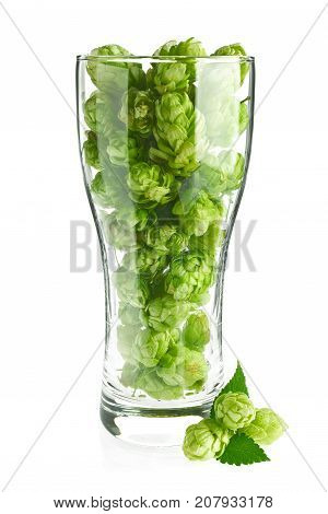 Beer goblet with aromatic hop and green leaves, isolated on white background.