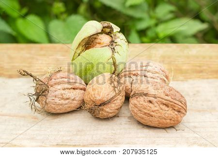 Several freshly harvested walnuts without green husks and one walnut in its cracked green husk on a wooden surface