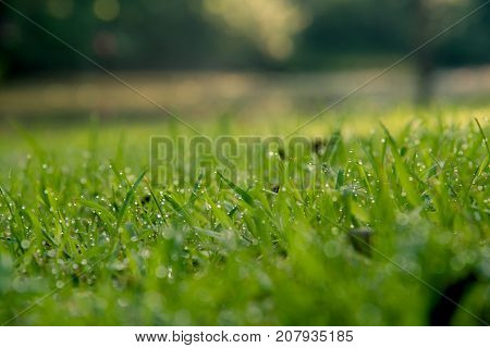 Grass Background : Abstract Natural Background Green Grass With A Beautiful Bokeh. Dew In An Early M