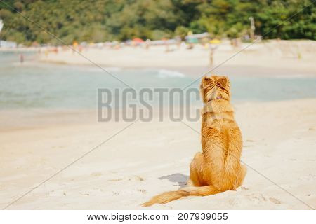 red dog sitting on the beach tourist island turn their backs to the other bank with people and waiting pensive.