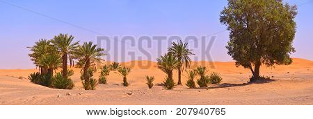 A small oasis in the Sahara desert in the background there are sandy lunches