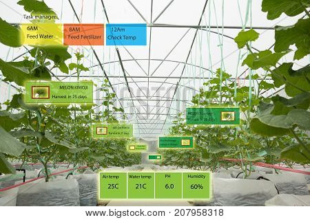 Smart agriculture concept Agronomist or farmer use Artificial intelligence and augmented reality in farm to help grow systems saving water resources reduce labor time make high yield and predict