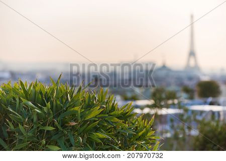 Plants and vegetation on a terrace with the Eiffel tower in a blurry background, Paris, France