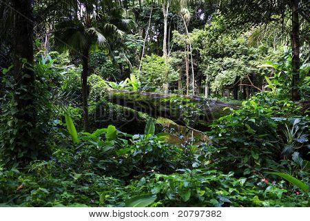 Atlantic forest