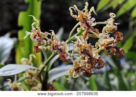 Blossom of an atypical orchid, closeup view