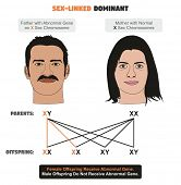 Sex-linked Dominant Hereditary Trait infographic diagram showing father with abnormal gene on X sex chromosome while mother has normal ones for genetics and medical science education poster