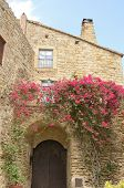 Pink flowers on stone wall of house in the village of Pals located in the middle of the Emporda region of Girona Catalonia Spain. poster