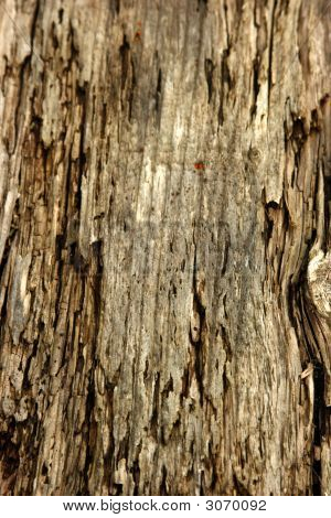 Rotted Wood Grain