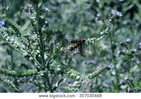 Butterflies and insects collect sweet nectar from wild wildflowers. Large selective focus.