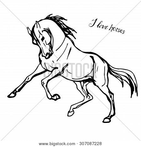 Vector-isolated On A White Background Black And White Contour Drawing Of A Galloping Horse