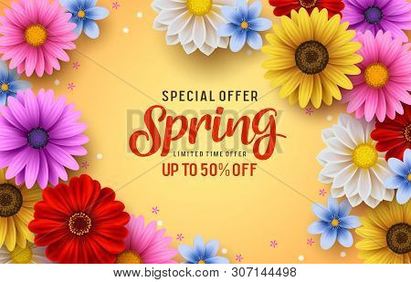 Spring Special Offer Vector Banner Background With Spring Season Sale Text And Colorful Chrysanthemu