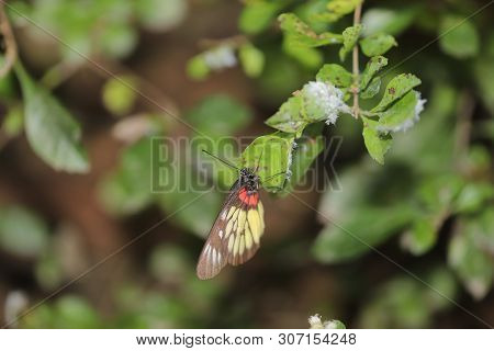 Black And Yellow Lichen Moth At Nature