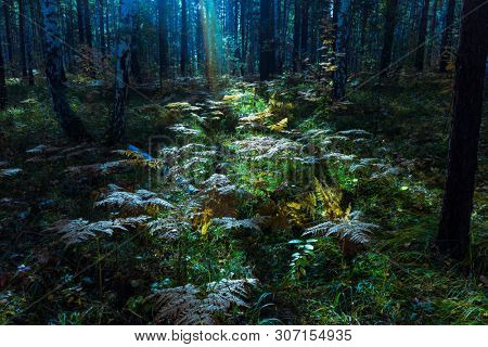 Rays of Sunlight and Green Forest, Sunbeams Among the Branches in Misty Autumn Forest, Fantasy Spirit of the Enchanted Mysterious Forest,  Mystic Abstract and Magical Image of Glitter