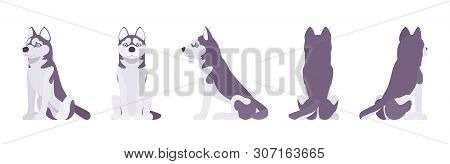 Husky dog sitting. Northern sled, medium size compact Siberian breed, cute family companion for active fun and home security. Vector flat style cartoon illustration, white background, different views poster