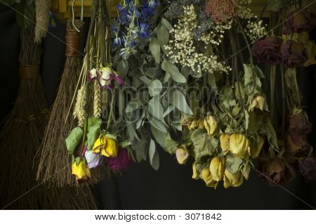 Dried Herbs And Flowers
