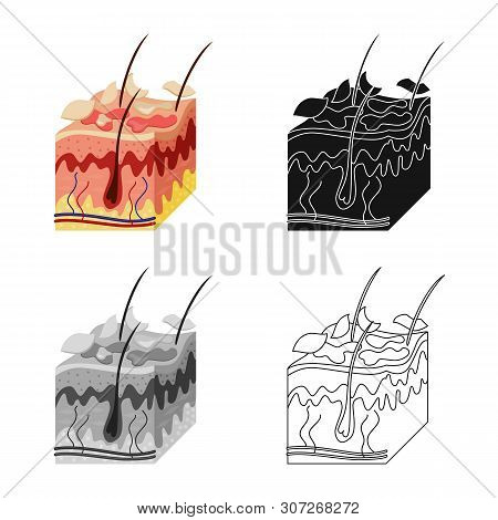 Vector Design Of Skin And Epidermis Icon. Collection Of Skin And Tissue Vector Icon For Stock.