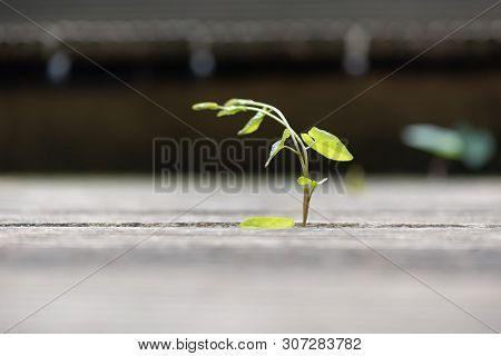 Plant Growing Through Wooden Planks Close-up View