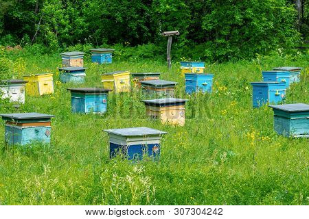 A Row Of Bee Hives In A Field Of Flowers With An Orchard Behind. Shulgan-tash Nature Reserve