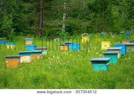 Hives In An Apiary In A Spring Garden. Honey Business Concept.  Shulgan-tash Nature Reserve
