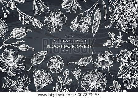 Floral Design With Chalk Japanese Chrysanthemum, Blackberry Lily, Eucalyptus Flower, Anemone, Iris J