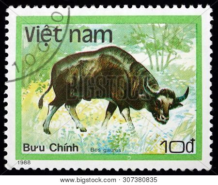 Vietnam - Circa 1988: A Stamp Printed In Vietnam Shows Gaur, Bos Gaurus, Is The Largest Extant Bovin