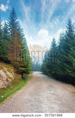 Gravel Road Through Forest In Mountains. Spruce Trees Along The Way. Foggy Autumn Weather With Brigh