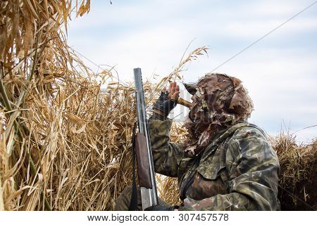 The Duck Hunter Hiding In The Blind Of The Reeds And Lures The Ducks