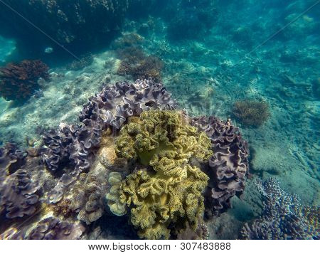 Colorful Corals In Shallow Water At Outer Barrier Reef - Great Barrier Reef Australia