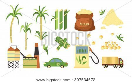 Sugarcane Plant And Produce Set, Alternative Fuel And Cubed And Granulated Powder Of Sugar Cane