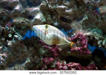 Photo Of Exclusive Aquarium Marine Fish Close Up.