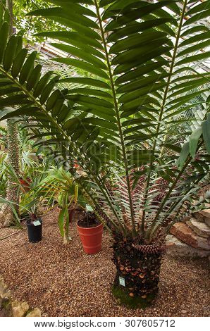Beautiful Tropical Plants Are Growing And Blooming In A Botanical Garden