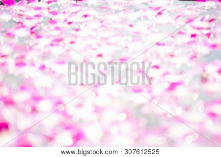 Blurry Bokeh Of Light Reflection On Water Surface With Orchid