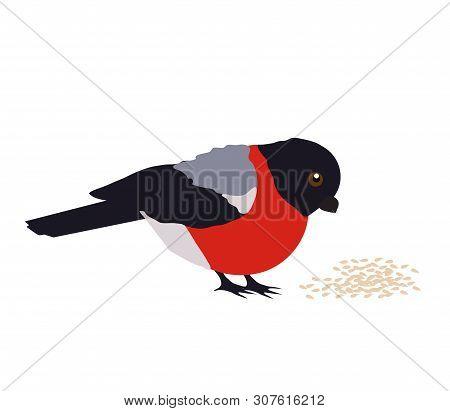 Bullfinch Pecks Grain On A White Background. Cartoon Vector Illustration.