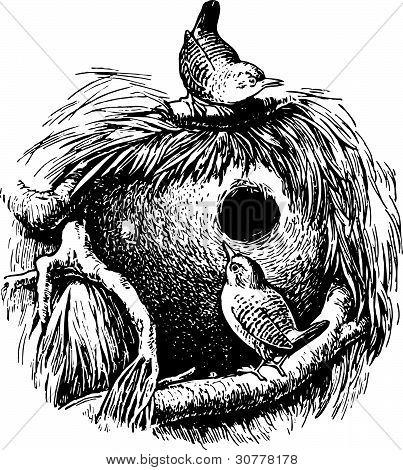 Bird wren (troglodytes)