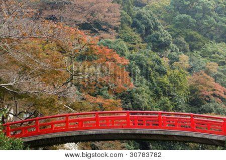 Japanese fall colors in mino park, Osaka, Japan
