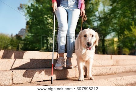 poster of Guide dog helping blind person with long cane going down stairs outdoors