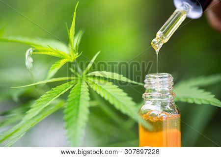 Hemp Oil, A Woman Holding A Dropper With An Oil Product, Cannabis Cbd Oil.