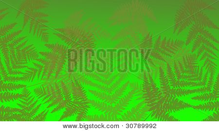 Vibrant Fern Background.