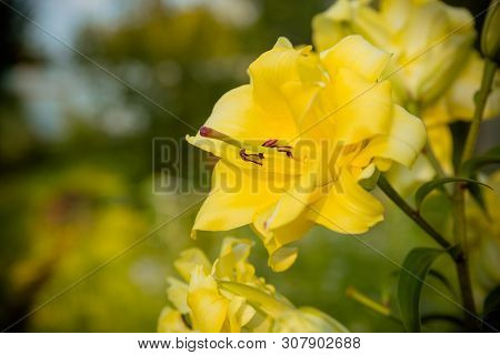 A Daylily Is A Flowering Plant In The Genus Hemerocallis Gardening Enthusiasts And Professional Hort