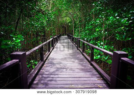 Wooden Foot Bridge With Handrails Through Wood Forest. Footpath Through Nature In Forest.