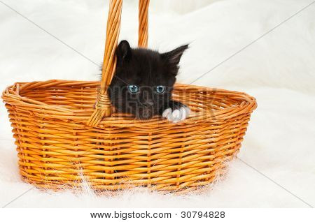 one black beautiful fluffy little kitten in basket on white fur background poster