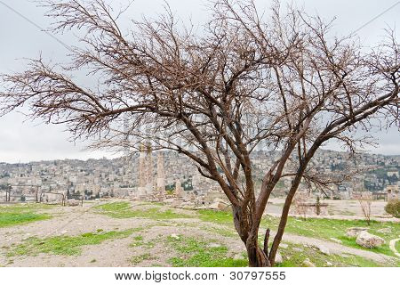 Temple Of Hercules In Antique Citadel In Amman