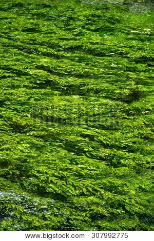 River Stream With Emerald Green Water And Green Water Plants
