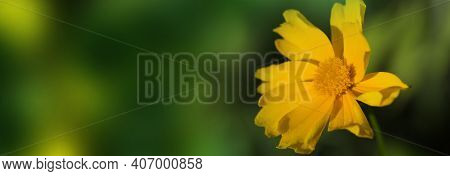Cute Yellow Summer Flower