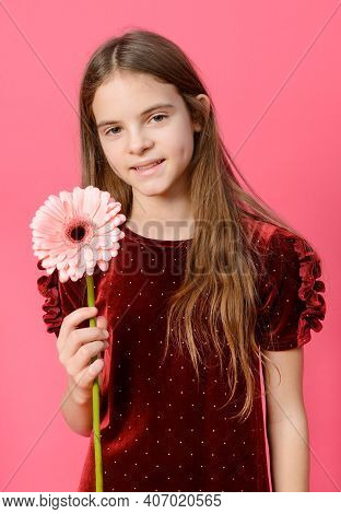 1 White Girl 10 Years Old In A Red Dress With A Pink Gerbera Flower In Her Hands On A Pink Backgroun