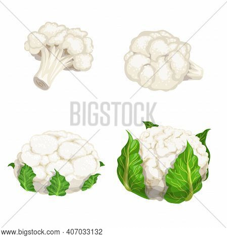 Cauliflower Set. Vegetables In Cartoon Flat Design. Eco Farm Fresh Veggies. Vector Illustrations Iso